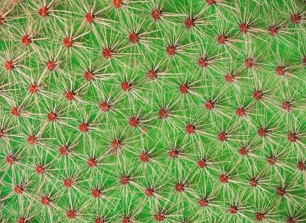 Primer plano de textura de cactus