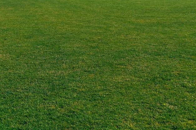 Primer plano, textura de un césped de hierba verde en el césped de una casa.