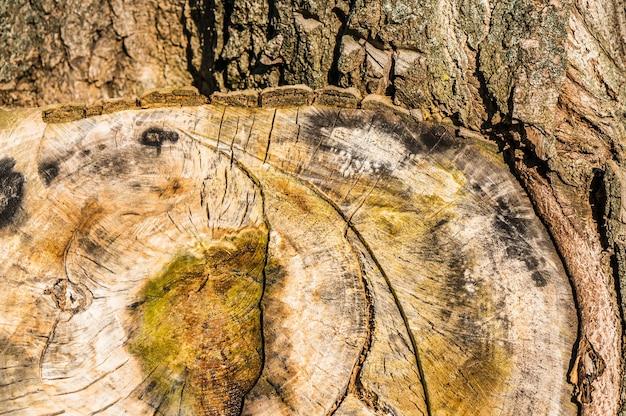 Primer plano de una textura de tocón de árbol durante el día