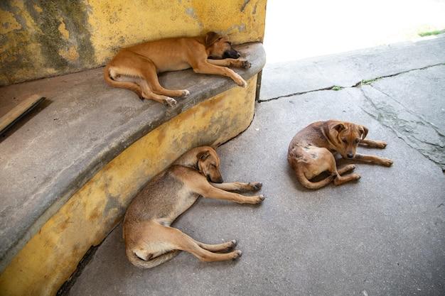 Primer plano de tres perros tumbado relajándose al aire libre