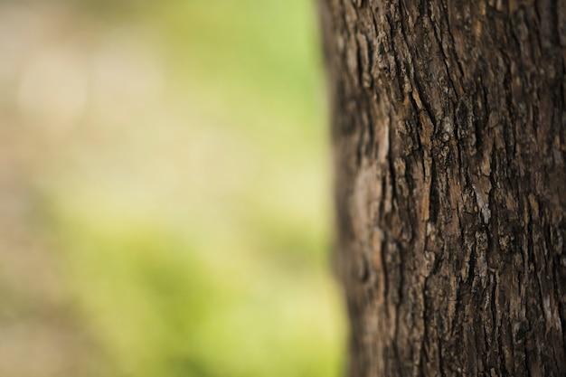 Primer plano de tronco de árbol en el fondo borroso