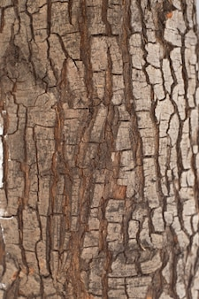 Primer plano de tronco de árbol