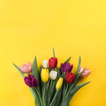 Primer plano de tulipanes de colores sobre fondo amarillo