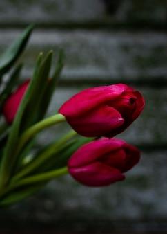 Primer plano de tulipanes rojos