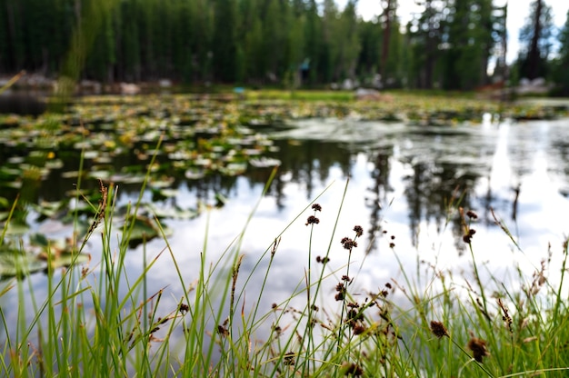 Primer plano de la vegetación alrededor de un lago high country en california, ee.