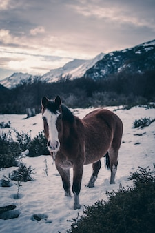Primer plano vertical de un caballo marrón en un bosque de invierno
