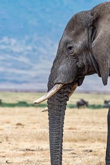Primer plano vertical de la cabeza de un lindo elefante en el desierto