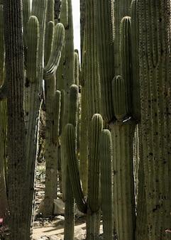 Primer plano vertical de hermosos cactus columna