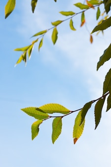 Primer plano vertical de las hojas de las ramas de un árbol con el cielo de fondo