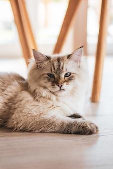 Primer plano vertical de un lindo gato mirando mientras está acostado en el piso de madera
