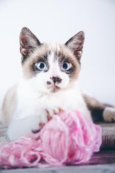 Primer plano vertical de un lindo gato de ojos azules marrón y blanco jugando con un ovillo de lana