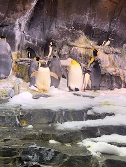 Primer plano vertical de lindos pingüinos bajo las rocas en el zoológico