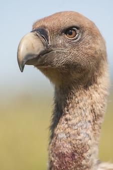 Primer plano vertical de un magnífico halcón con un natural borrosa