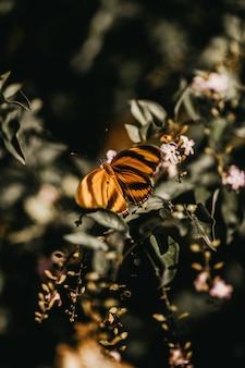 Primer plano vertical de una mariposa rayada negra descansando sobre una planta verde con flores rosas