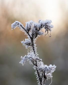 Primer plano vertical de una planta congelada con un fondo borroso
