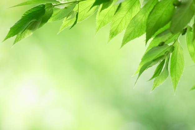 Primer plano de la vista de la naturaleza de la hoja verde sobre fondo verde borrosa en el jardín