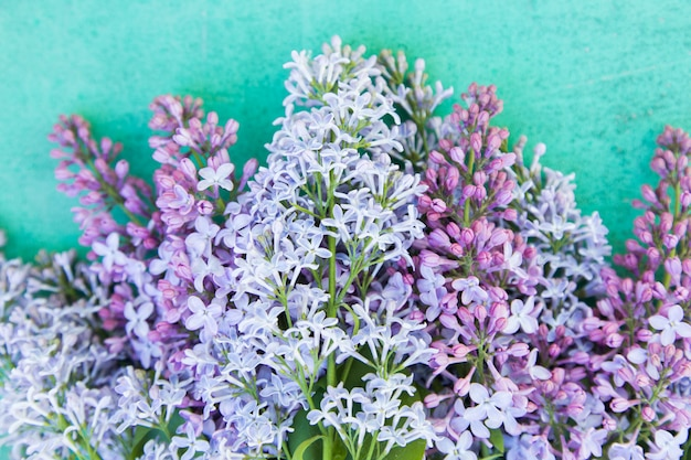 Primer púrpura de las flores en fondo azul