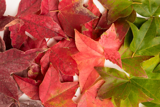 Primer surtido de hojas de otoño