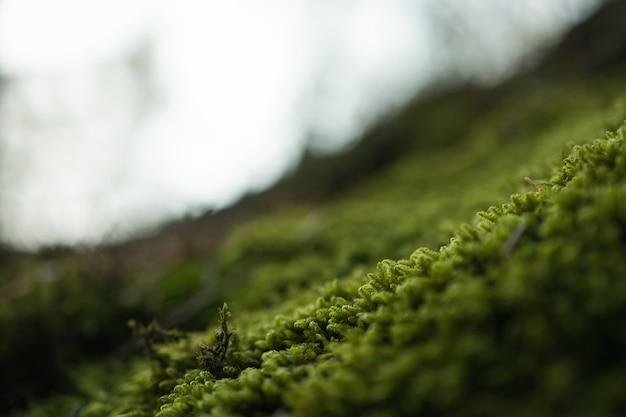 Primer tiro de hierba verde