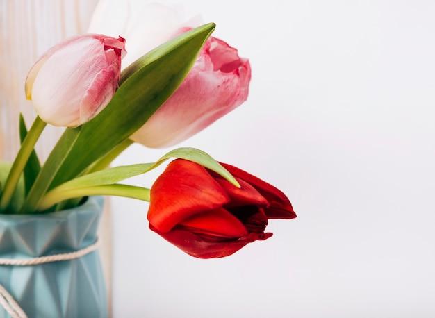 El primer del tulipán fresco florece en florero en el fondo blanco
