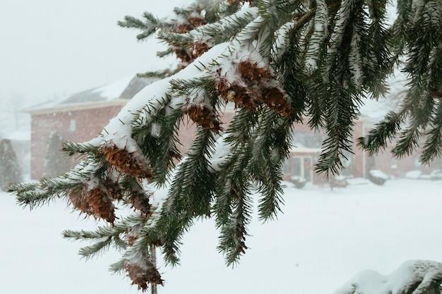 Primeras nevadas piñas de navidad arborvitae hermosas campanas brillantes