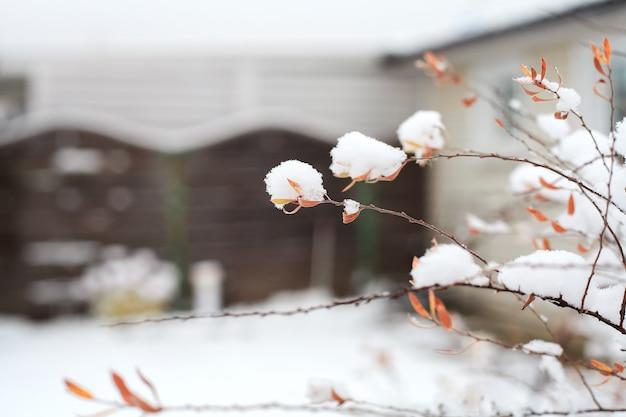 Primero nieva en las ramas con hojas.