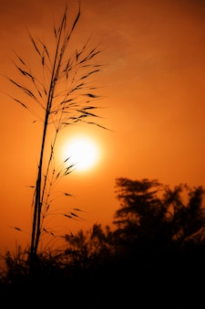 Los primeros rayos del sol naciente pasan a través de la niebla y el rocío sobre la hierba