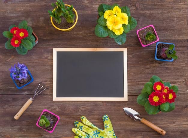 Primrose primula vulgaris, jacinto violeta, narcisos en maceta, herramientas, guantes de mujer, concepto de postal de jardinería de primavera