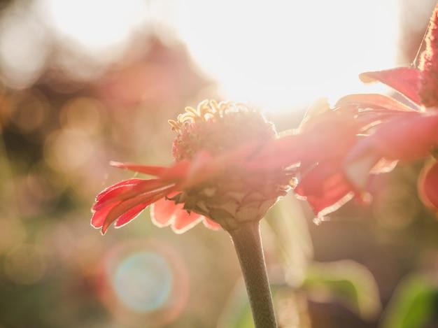 Principios de la primavera flores sobre un césped
