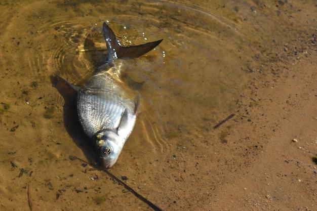 Problema de contaminación ambiental y oceánica.