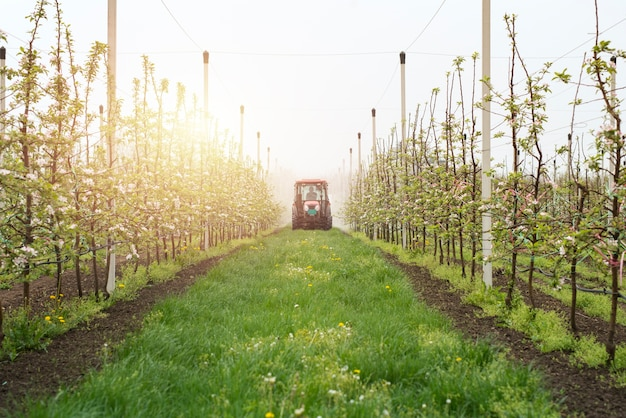 Producción de frutos del huerto de manzanas
