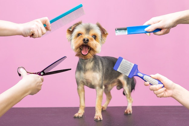 Profesional cuida a un perro en un salón especializado. peluqueros con herramientas en las manos. fondo rosa concepto de peluquero