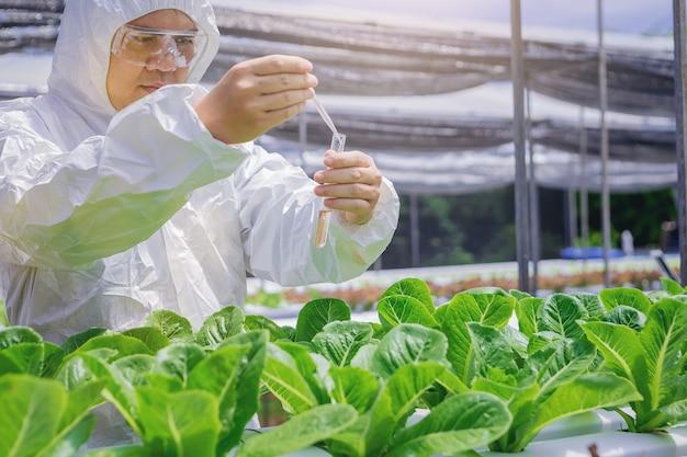 Propietario granja de vegetales hidropónicos en el invernadero, prueba de laboratorio de nutrición para hortalizas orgánicas