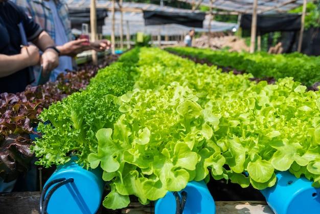 Propietario de la granja hidropónica que controla el ph del agua y la temperatura ambiente agrícola concepto de crecimiento.