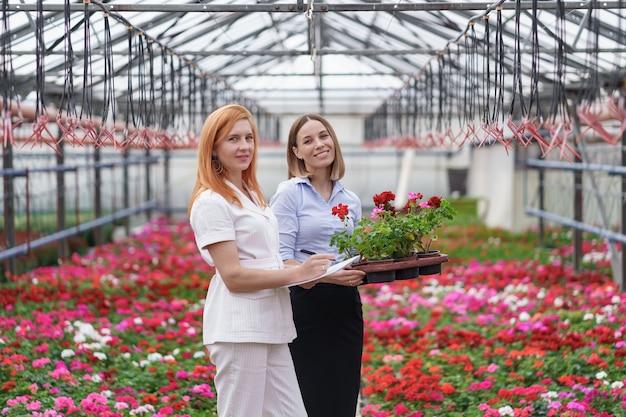 Propietario de invernadero presentando opciones de flores a un posible cliente minorista.