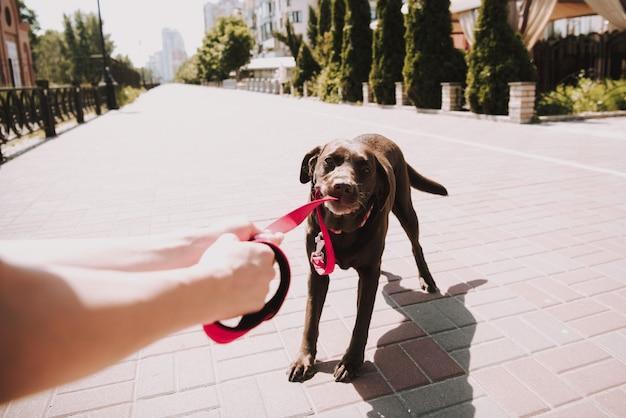 Propietario con pet on city promenade en sunny summer day.