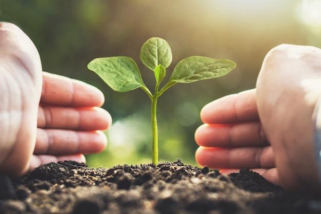 Protección de dos manos cuidando el árbol. concepto guardar mundo
