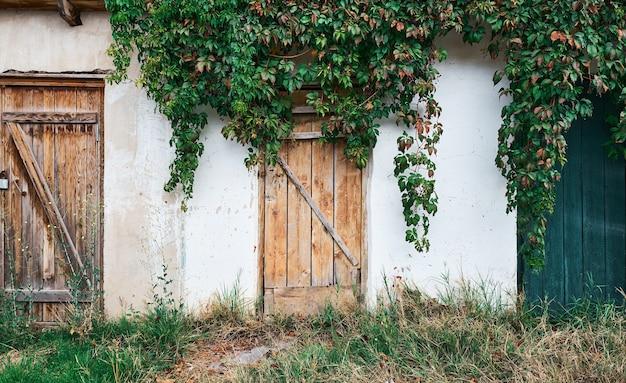 Prueba antigua con una puerta con textura de madera, una pared vieja con yeso desmoronado, cubierto de uvas silvestres. destrucción natural de la estructura.