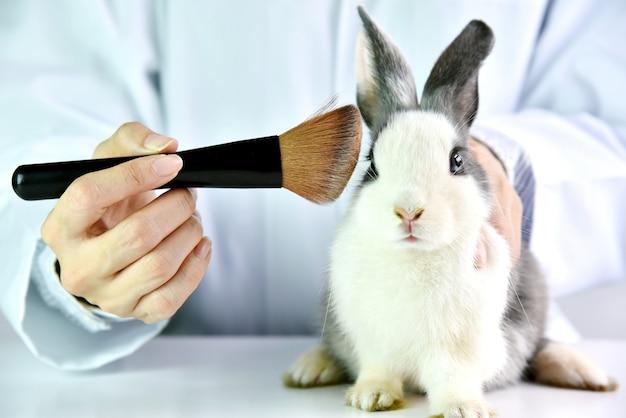 Prueba de cosméticos en animales de conejo, científico o farmacéutico investigan prueba de ingredientes químicos en animales en laboratorio