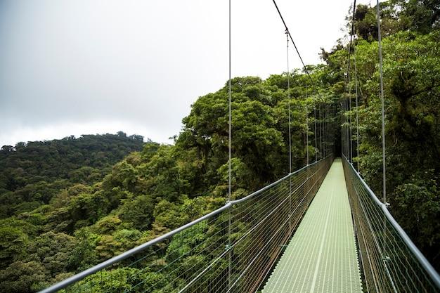 Puente colgante en selva tropical en costa rica