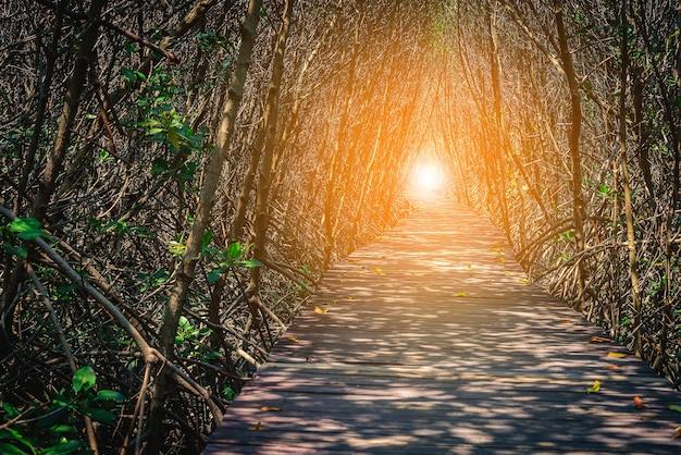 Puente de madera en el bosque de mangle betaween