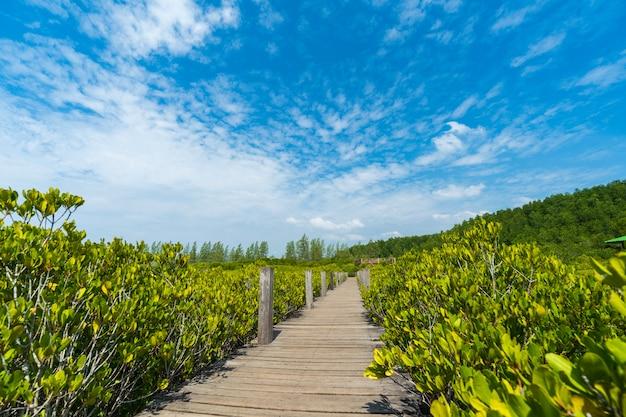 Puente de madera en los manglares en tung prong thong o golden mangrove field, rayong, tailandia