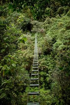 Puente peligroso en un bosque salvaje sobre la vegetación