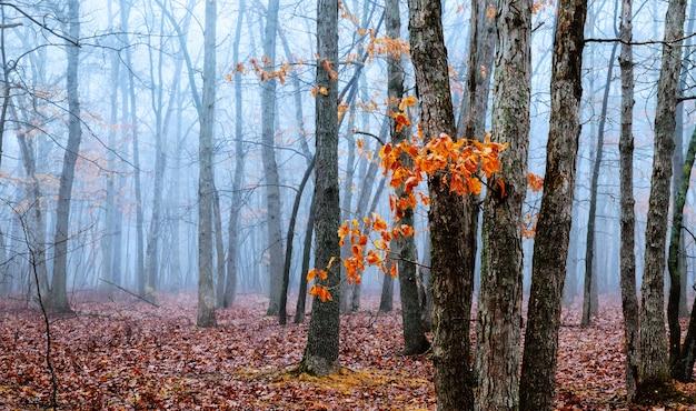 Puerta mágica en un bosque misterioso con niebla.