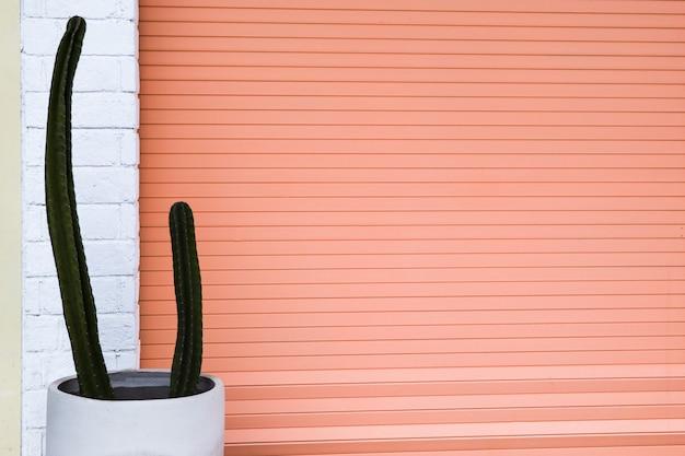 Puerta rosa y un cactus.