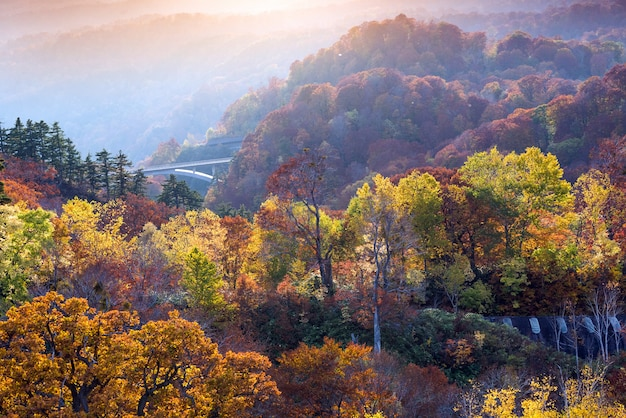 Puesta de sol bosque otoño akita japón