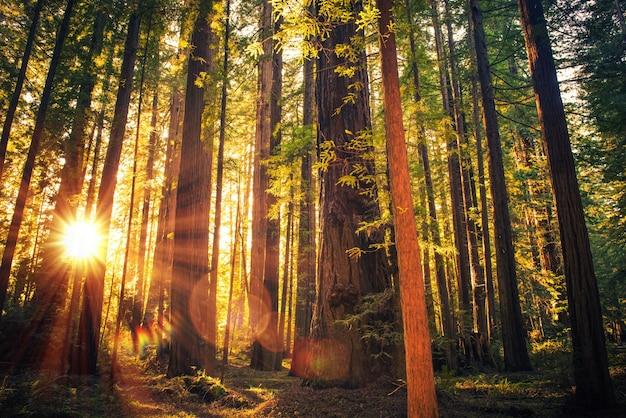 Puesta de sol del bosque