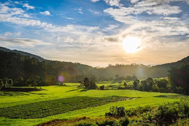 Puesta de sol en campo de granja de arroz tailandia