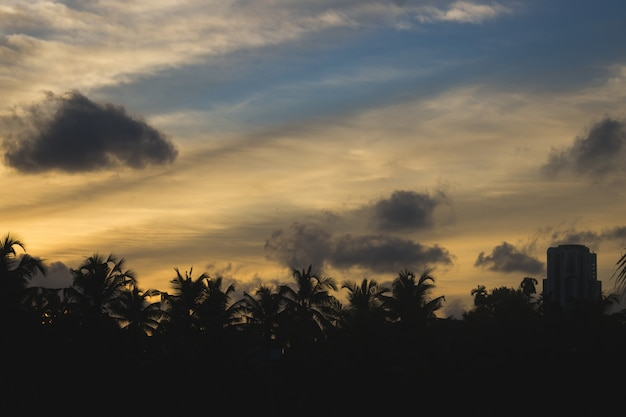 Puesta de sol detrás de siluetas de palmeras y edificios