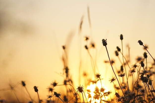Puesta de sol luz naranja con hierba al lado de la carretera.